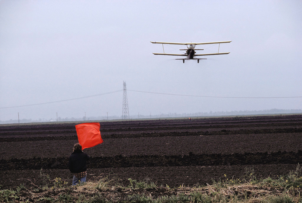 """Crop dusting. Spraying pesticides on agricultural crops in California. The worker holding the flag (known as a """"flagger"""") marks the row where the duster needs to spray next. Flagman at the end of rice field, with seeder plane approaching."""