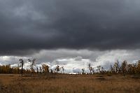 Dark clouds over this autumn birch forest along Kungsleden Trail, Lapland, Sweden