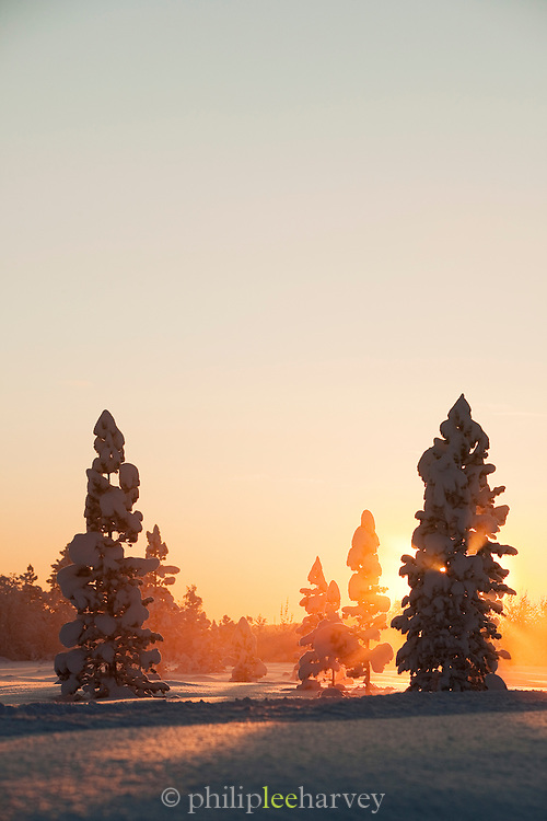 Sunset over the snowy forests of near Kirkeness, Finnmark region, northern Norway