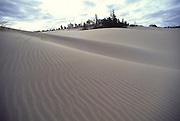 Sand Dunes, Honeyman State Park,  Oregon<br />