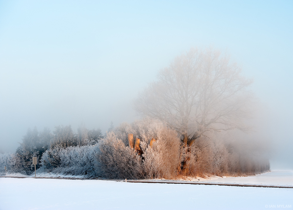 Winter Sun and Rising Fog - Isle of Funen, Denmark