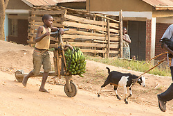 Boy and Wooden Bicycle Carrying Bananas