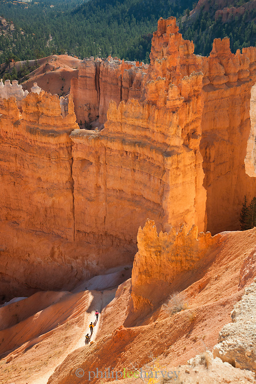 Bryce Amphitheatre, Bryce Canyon National Park, Utah, United States of America
