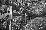 Trees overhanging a walking path and fence during autumn at Sharon Woods in Southwestern Ohio, USA