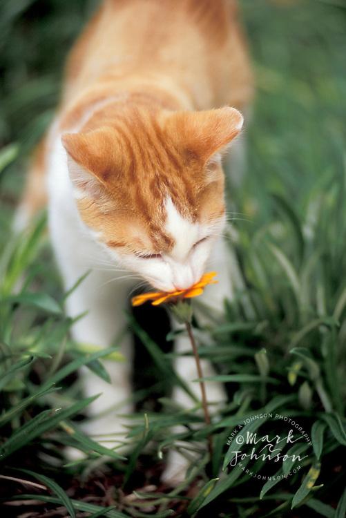 Kitten in backyard garden *****Property Release available
