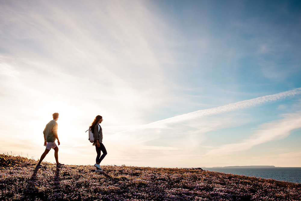 Couple walking through pink flowers on the top of the Plemont cliffs and headland, enjoying views out to sea and of the sun setting in Jersey, CI