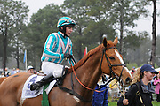 March 28, 2009: Carolina Cup Steeplechase Races. GOOD NIGHT SHIRT and jockey William Dowling win the G1 Carolina Cup