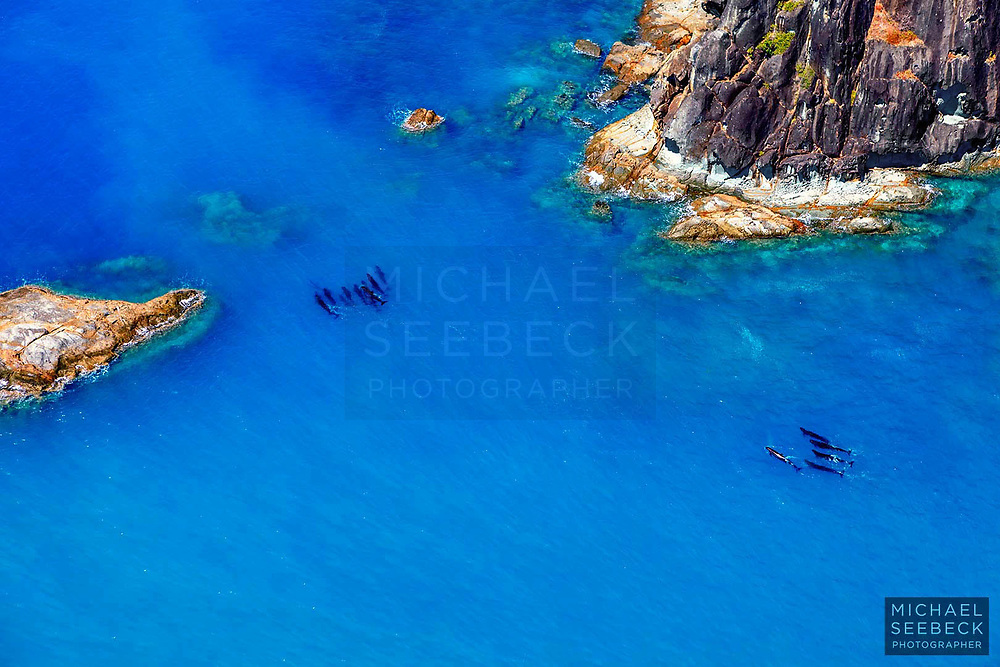 A pod of Short-finned Pilot Whales captured from the air, near Hook Island, in the Whitsunday Group of islands.<br /> <br /> Code: LAQW0007<br /> <br /> Open Edition Print / Stock Image