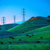 High voltage electric power transmission lines tower above cattle grazing in pastures near Pinole in the Coastal Ranges of California's East Bay Area.