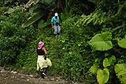 Ecuador, April 29 2010: Lorna Brooks gets ready to climb up a bank to get into Río Canandé Reserve. Copyright 2010 Peter Horrell