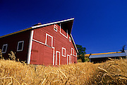 Image of a red barn and wheatfield, Palouse, eastern Washington, Pacific Northwest, property released by Randy Wells