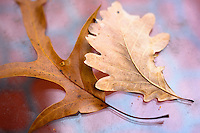 Two fallen leaves lie on a glass table in late autumn.