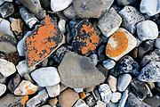 Rocks and lichens at a beach at Hornsund, south-western Spitsbergen, Svalbard