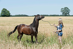 Young woman standing with her brown horse in crop field, Bavaria, Germany