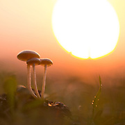 Unidentified Mushrooms. The setting sun in the background