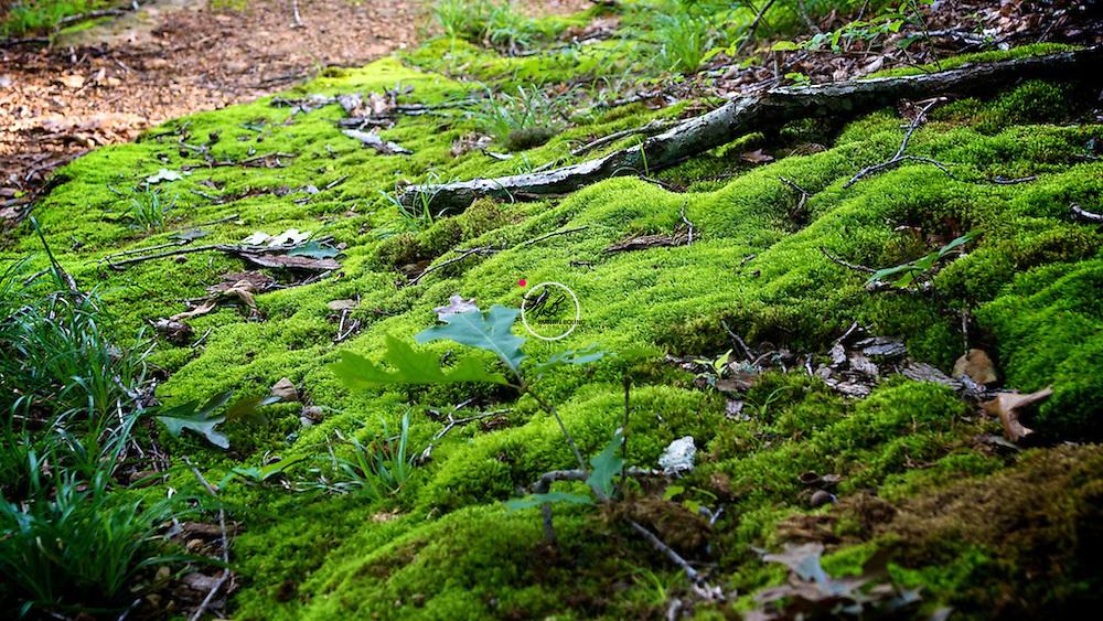 Moss, steep cliffs. at Green's Bluff Preserve, Indiana