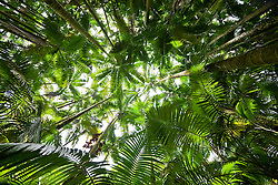 Palm forest in Hawaii Tropical Botanical Garden, Big Island, Hawaii