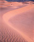 Dawn light on Sand Dunes, Death Valley National Park, California
