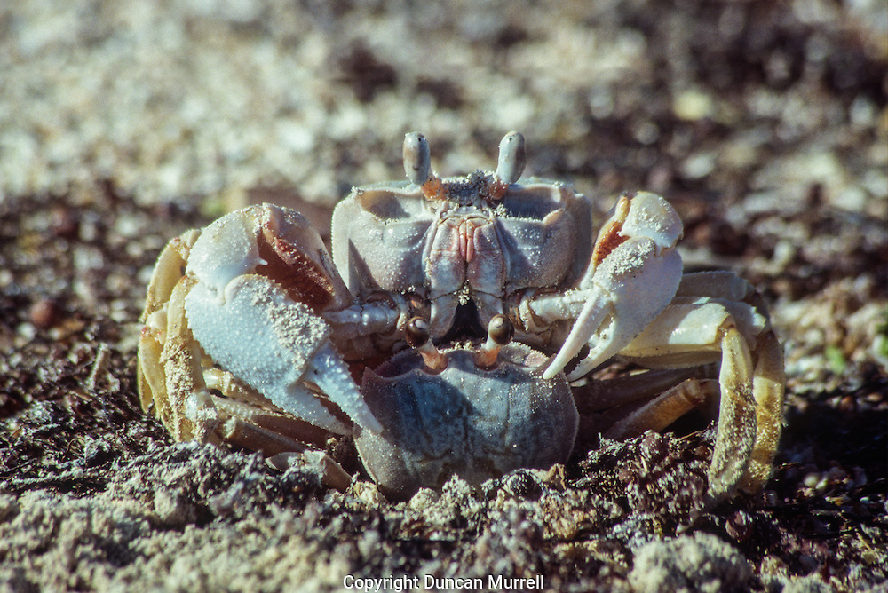 I would say that apart from the sea birds crabs were the most ubiquitous creatures that I encountered on the trip.