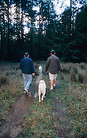 Two men go for a walk through the forest with two dogs in Sea Ranch, California.