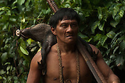 Huaorani Indian - Ontagamo Kaimo carrying a peccary that he hunted for food. Gabaro Community. Yasuni National Park.<br /> Amazon rainforest, ECUADOR.  South America<br /> This Indian tribe were basically uncontacted until 1956 when missionaries from the Summer Institute of Linguistics made contact with them. However there are still some groups from the tribe that remain uncontacted.  They are known as the Tagaeri & Taromenani. Traditionally these Indians were very hostile and killed many people who tried to enter into their territory. Their territory is in the Yasuni National Park which is now also being exploited for oil.