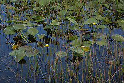 plant life in the water at Green Cay Wetlands in Florida