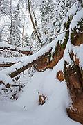 Snowy winter day and fallen dead wood over small sandstone cliff-face, Gauja National Park (Gaujas Nacionālais parks), Latvia Ⓒ Davis Ulands | davisulands.com