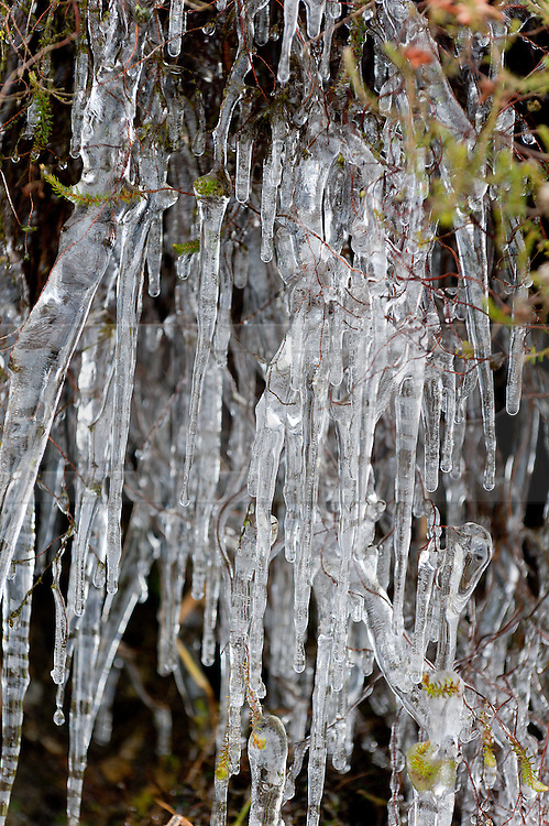 © Licensed to London News Pictures. 23/11/2015. Elan valley, Rhayader, Powys, Wales, UK. Icicles are seen at Elan Valley in Mid Wales after a very cold night. Photo credit: Graham M. Lawrence/LNP