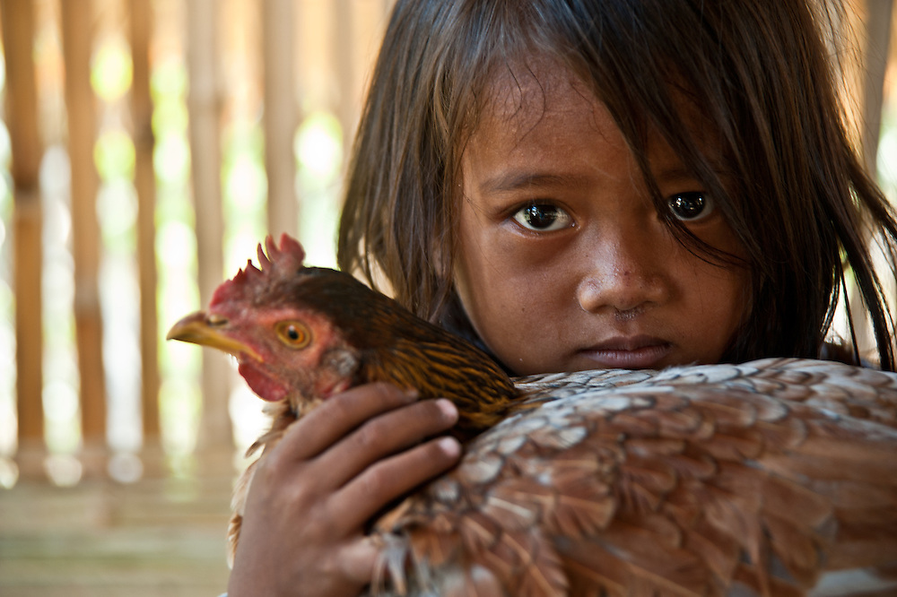 Chheu Teal Korng village:.Remarkable how much CWS has accomplished here in less than a.year, because they are working with such a willing and committed local committee. CWS is also supporting micro loans and training for fish, produce and.mushroom farming. Nearly half of the families in this community are women-led households, mostly as a result of conflict.  A woman in the chickenhouse that is helping her family to make a living.