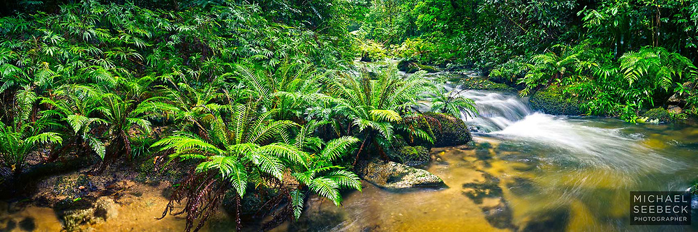 A beautiful clear cool mountain stream courses through high altitude ferny rainforest in this panoramic photograph.
