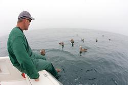 Sean Van Sommeran & Black-footed Albatross
