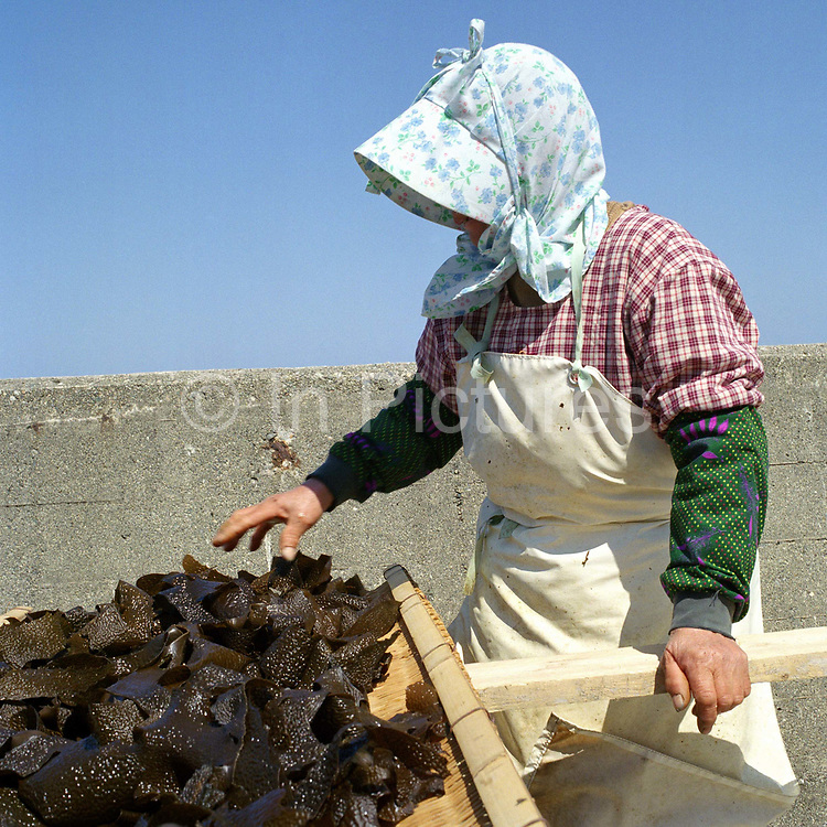 A woman drying her locally collected seaweed, Japan