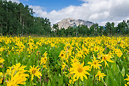 Wildflowers off Kebler Road in Crested Butte, Colorado.