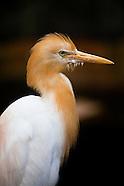egrets & storks