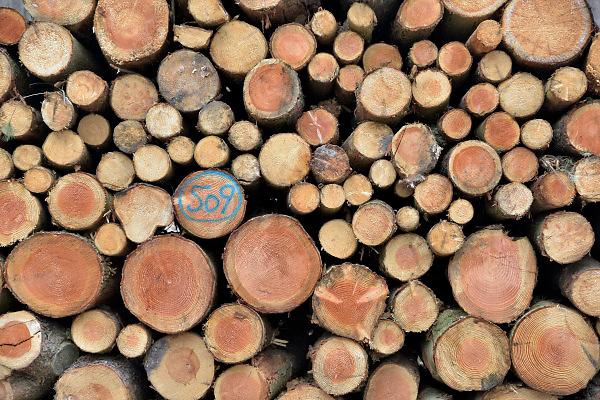 Nederland, Groesbeek, 2-4-2018Een stapel gekapte boomstammen liggen klaar voor transport. Staatsbosbeheer is bezig met het opruimen van dit bos. Tiijdens de storm van begin 2018 zijn veel bomen omgewaaid.Foto: Flip Franssen