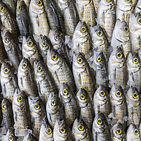 The Big Fish 2020
