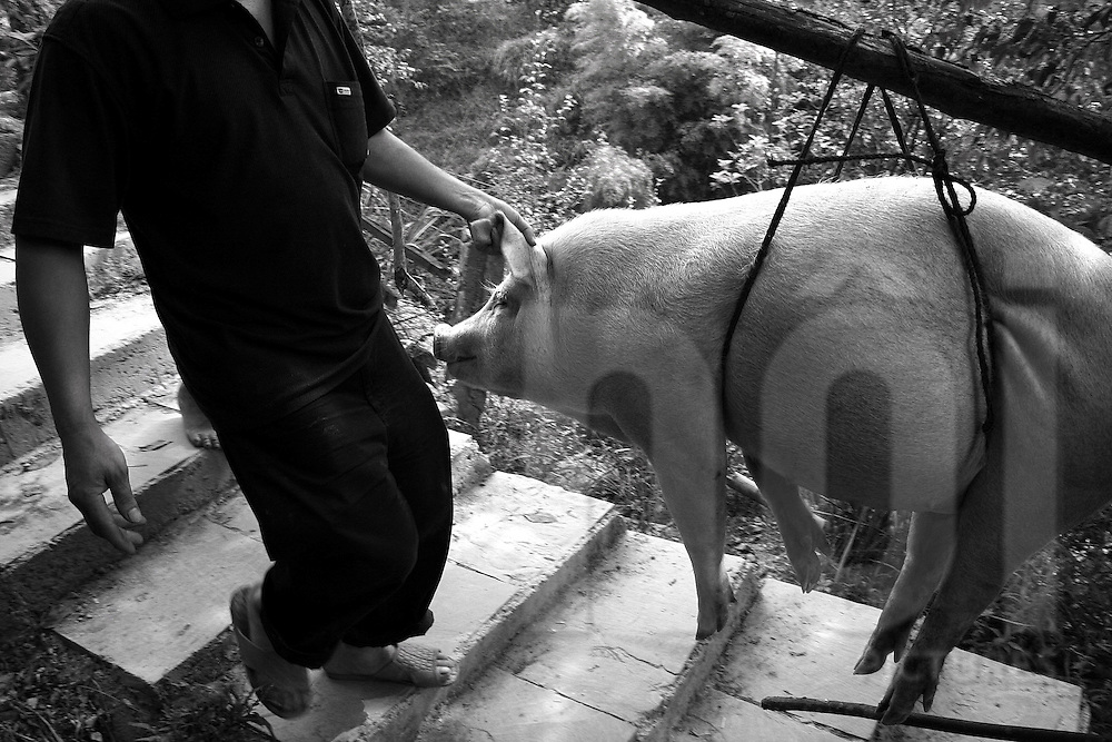 Men carrying a pig in the village of Ping'An, Guangxi, China, Asia