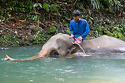 Southeast Asia, Thailand, Koh Chang Crossing a river on an Elephant.