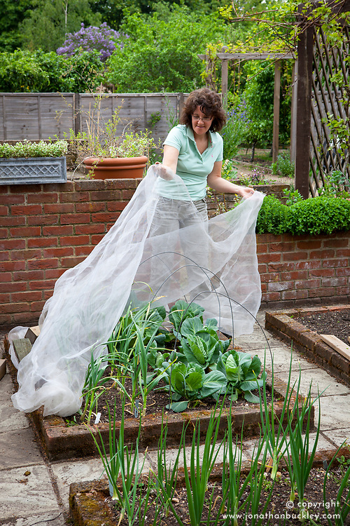 Protecting a vegetable bed of garlic and cabbages with netting