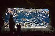 Nederland, Arnhem, 9-4-2013Het tropisch aquarium Burgers Ocean van dierenpark Burgers Zoo.Foto: Flip Franssen/Hollandse Hoogte