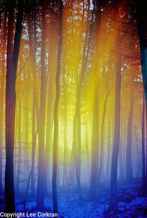 Evening mist through the German woods