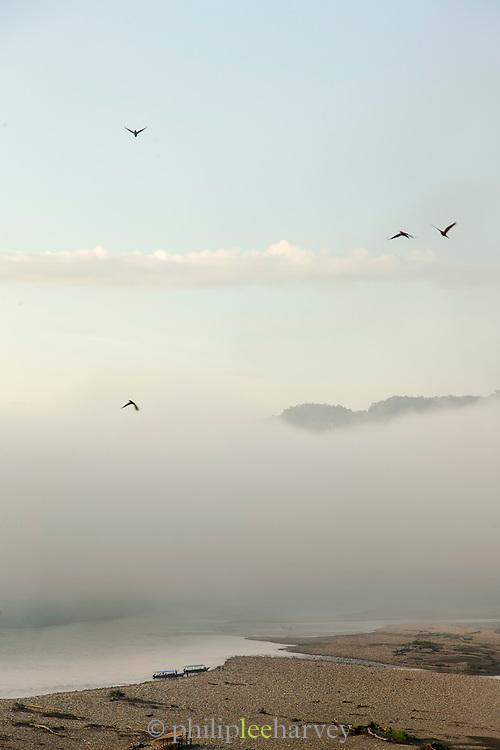 Macaws flying in Manu National Park, Peru, South America