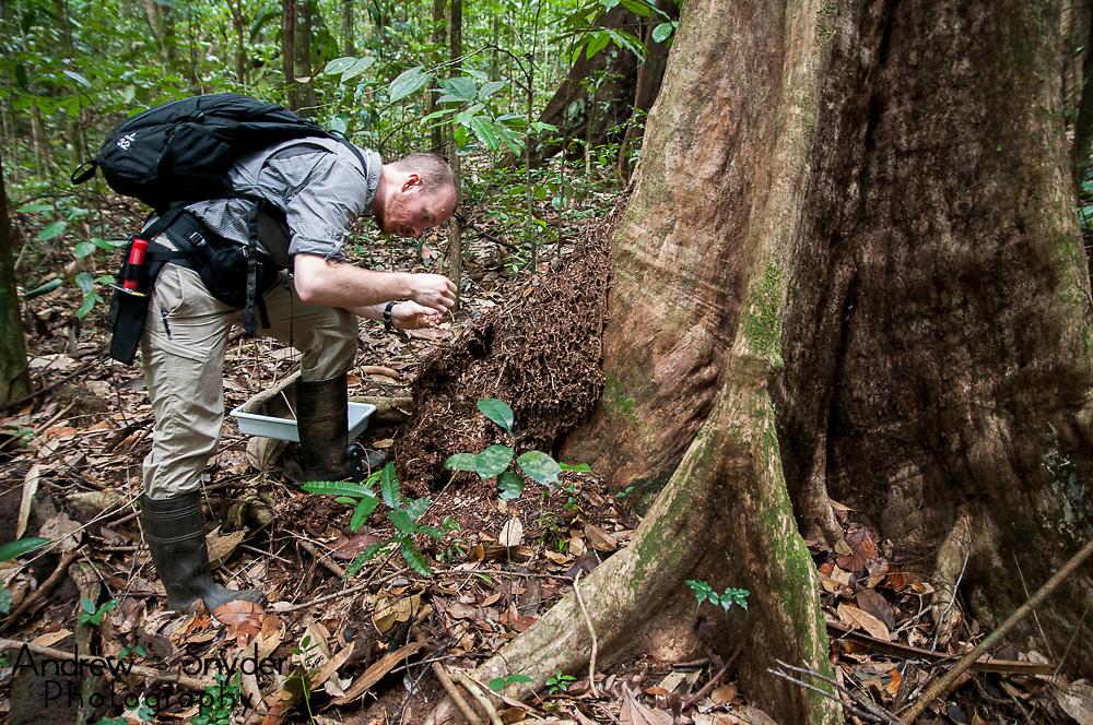 Smithsonian post-doc Michael Branstetter surveying ants. World Wildlife Fund/Global Wildlife Conservation Biodiversity Assessment Team 2-Potaro Plateau