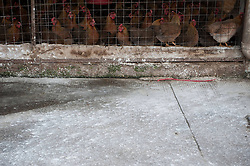 60827066 <br />  Photo taken on Dec. 13, 2013 shows disinfect powders around chicken cages at a live poultry market in Longgang District of Shenzhen City, south China s Guangdong Province. Samples taken from two live poultry markets in Shenzhen have tested positive for H7N9 bird flu, the Guangdong provincial health authority confirmed on Wednesday. Guangdong health authorities warned the public to be aware of H7N9 transmission risks. The poultry markets where samples tested positive were asked to close for a week, Friday, 13th December 2013. Picture by  imago / i-Images