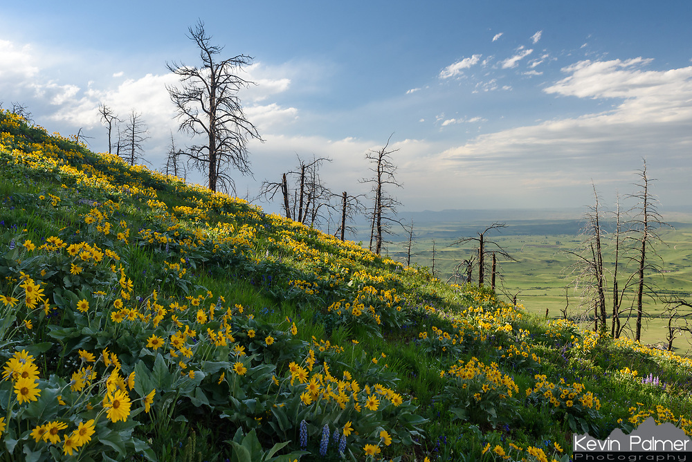 This is one of the most beautiful times of year in Wyoming. The valleys are green and the mountains are filled with colorful wildflowers. This was taken near Red Grade Road. The trees were burnt in a wildfire 10 years ago.