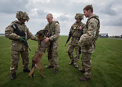 26/03/2014.  Private Terry Gidzinski (24) from Swindon and his dog Cheyenne (7) with members of the Military Working Dog section put on a display as the British Army reveal it's new specialist, combat and command skills formation today. This new part of the Army will be made up of 36000 Regular and Reserve soldiers, which is a third of the army as a whole and supports the logistics of operations both in the UK and abroad.  The command will officially launch on the 1 Apr 14.  Alison Baskerville/LNP