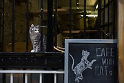 "A kitten sits on the ledge outside London Cat Village in Rivington Street, Shoreditch. The puss (aka moggie) rests on the ledge with netting to stop it jumping out into the street below - its cute face and striped fur an attraction for passers-by and customers of this business. The owners say, ""A little over 2 years ago, my husband was depressed due to stress which led to constant battles to hospital, our hope was finding a Holistic solution."" A cat café is a theme café whose attraction is cats that can be watched and played with."