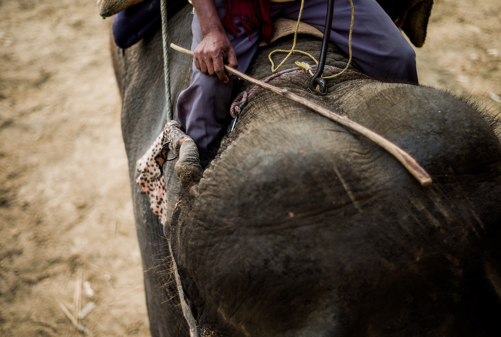 Helped by a WWF programme, mahouts are being retrained as to how best to treat their working elephants.