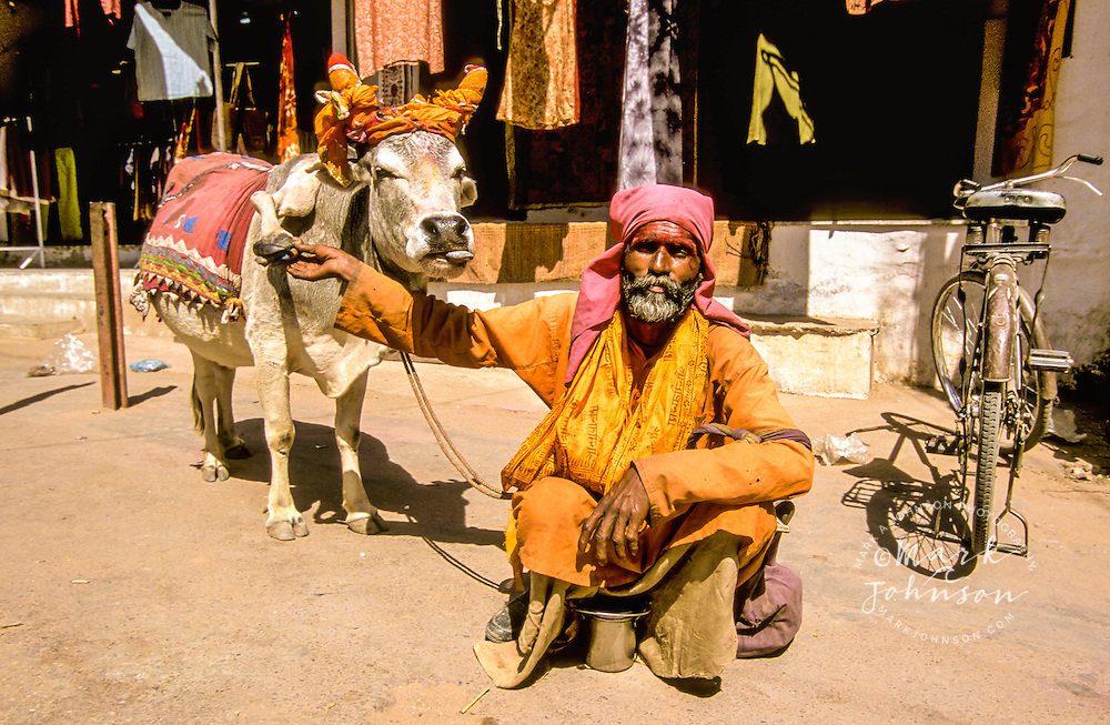 India, Rajasthan, Pushkar, man with his 5-legged cow.
