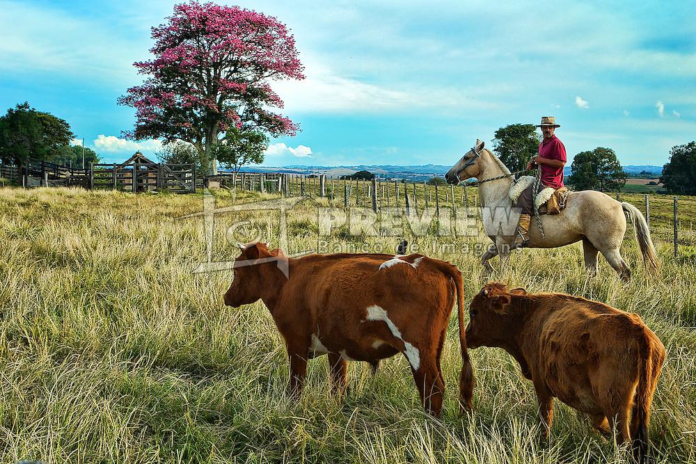 Tropeiro conduz a manada de bois próximo a uma paineira-rosa nos campos de Canguçu. FOTO: Jefferson Bernardes / Preview.com
